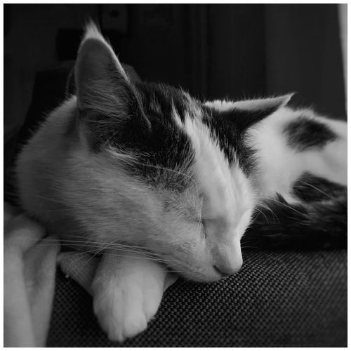 Close-up of cat resting on sofa