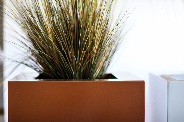 Planter Grass Indoors  No People Plant Plant Life Planter Planting Plants And Flowers Pot