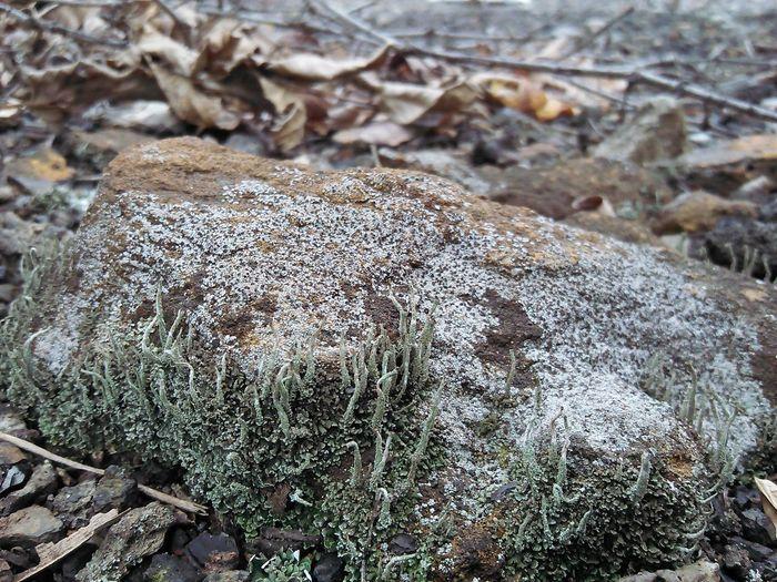 Autumn Fungi Micro Life