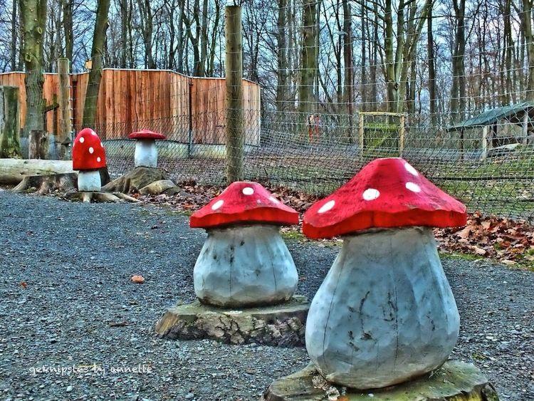 Mushrooms Nature Landscape HDR