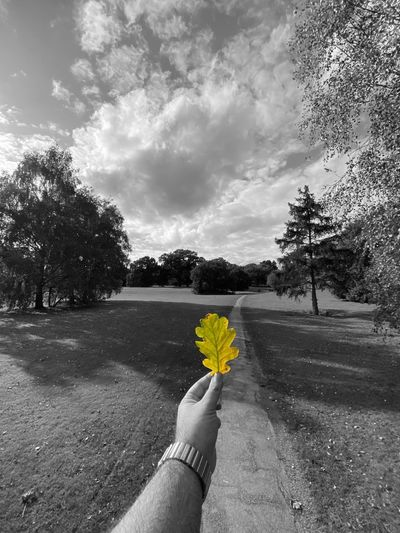 Midsection of person holding yellow flowering plant against sky