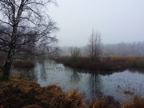Reflections Nature Reserve Foggy EyeEm Nature Lover Beauty In Nature Tree Water Nature Bare Tree Beauty In Nature Tranquil Scene Scenics Reflection Landscape Sky Grass No People Tranquility