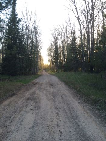 Camp road Beauty In Nature Dirt Road Long Road Michigan No People Outdoors Tranquil Scene