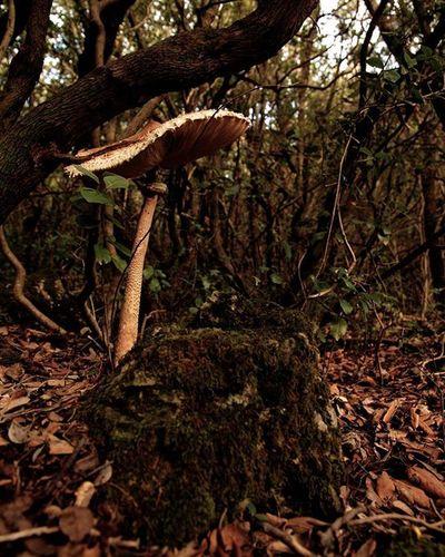 Sottobosco speciale MonteArgentario Funghi Mushroom Trees Autumn Toscana