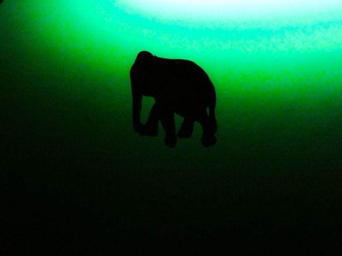 Elefant Light