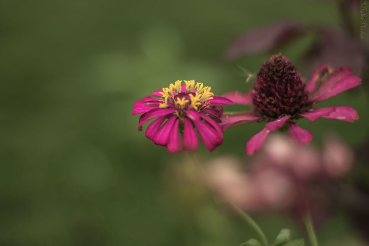 Flowering Plant Beauty In Nature Plant Nature Outdoors Nature Photography Nature_collection Nature Naturelovers Nature On Your Doorstep Flowering Plant Flowerphotography Flowers Flowersgarden Field Fieldscape Fiesta