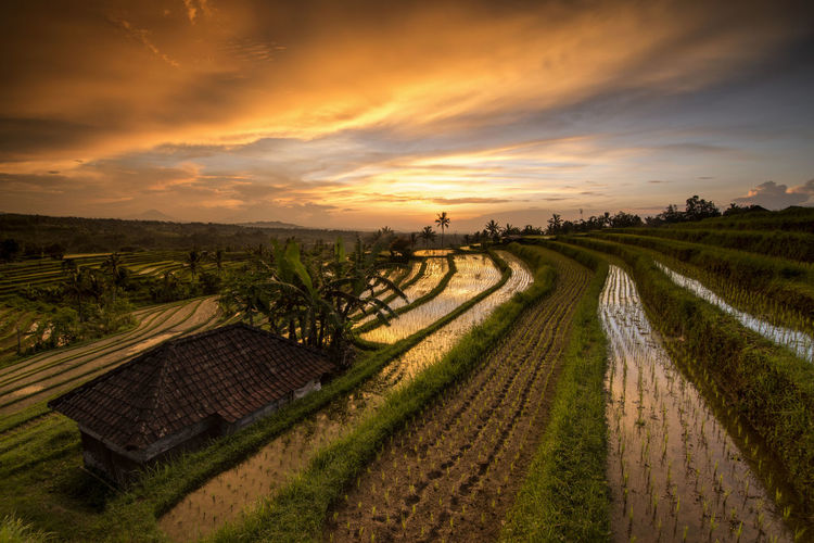 Panoramic shot of agricultural field against sky during sunset