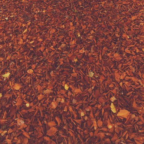 Vscocam Vzcopolskazlota Vzcopoland Vzcogood autumn fall