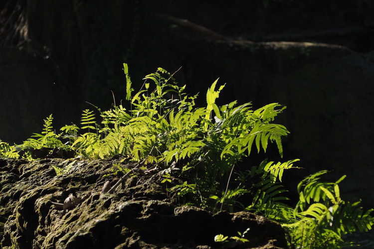 Green of Fern
