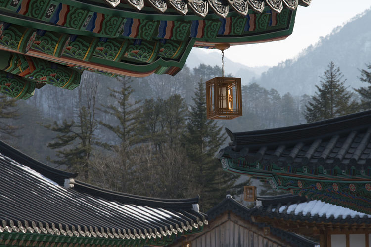 Lantern hanging on roof of temple against trees