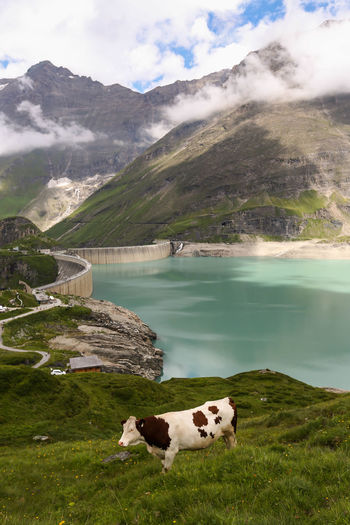 Sheep on lake by mountain against sky