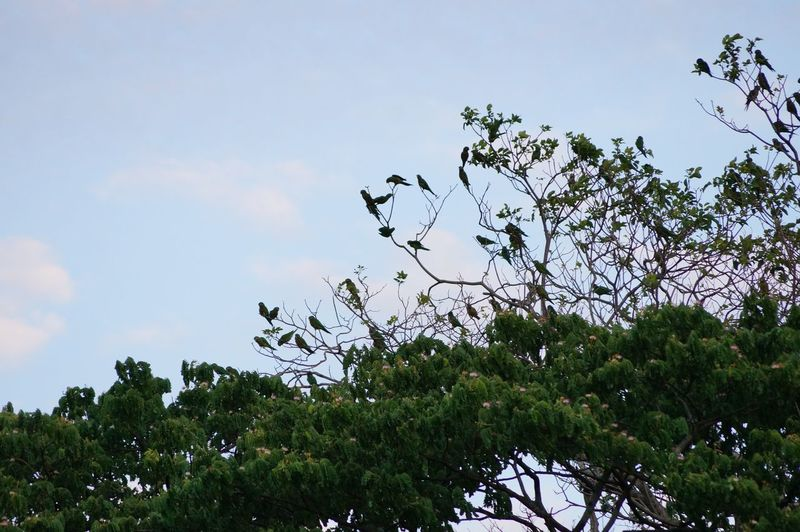 #bird #villahermosa Beauty In Nature Branch Day Low Angle View Nature No People Outdoors Sky Tree