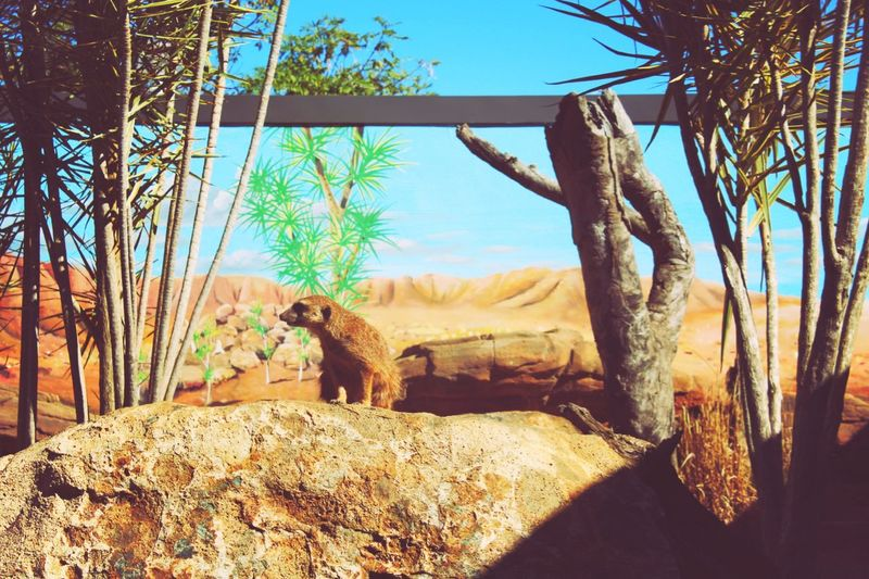 Port Macquarie Taking Photos Check This Out Zoo Animal Meerkat