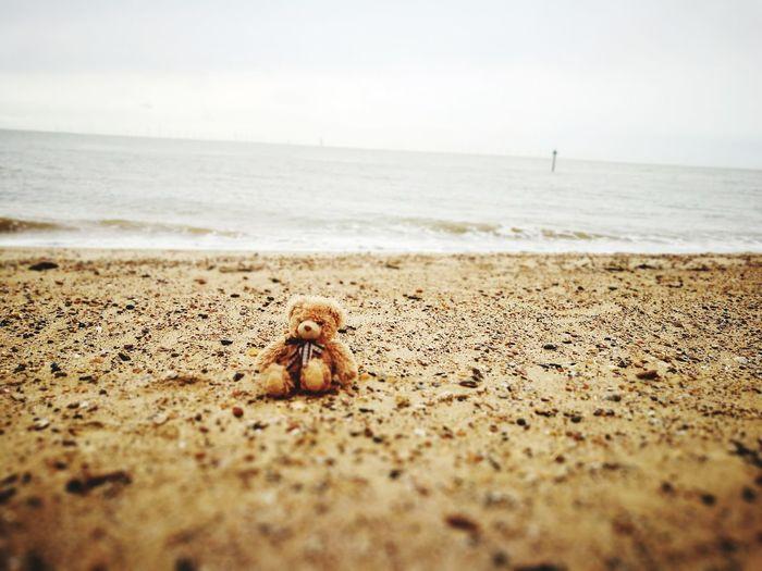 my Teddy bear sea Teddy Bear Mybear Sea Life Sea Water Beach Sand Summer Horizon Wave Sky Close-up