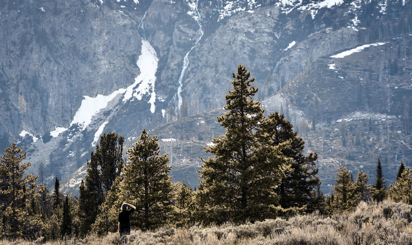 Pine trees on snowcapped mountains during winter