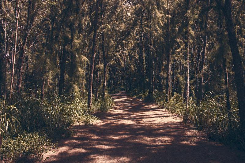 Path Path