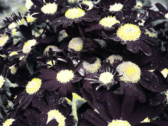 Flowers, Nature