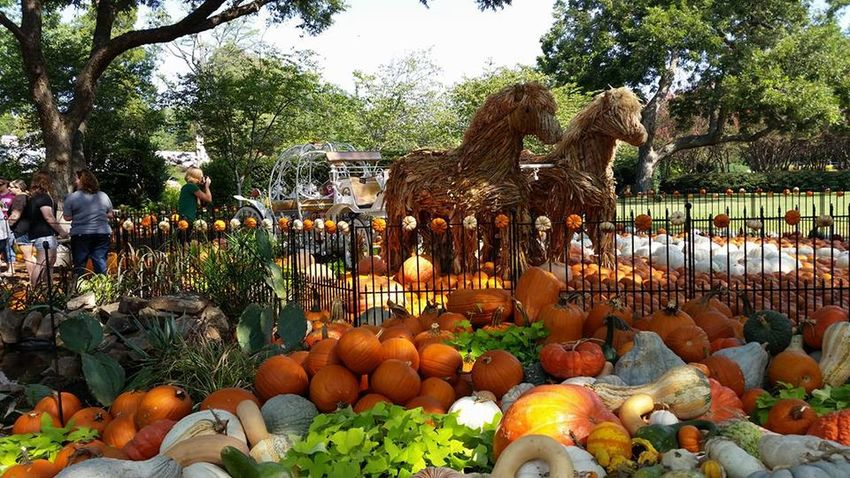 Autumn Day Fruit Gourds Horse Sculpture Outdoors Pumpkin Tree