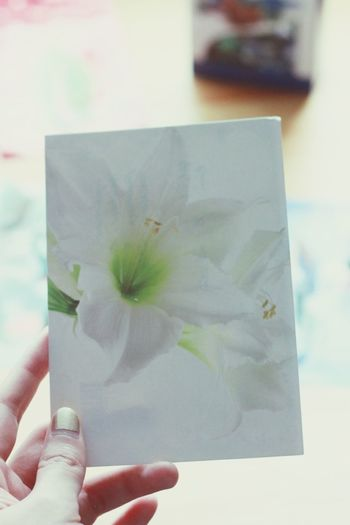 A card from a neighbor, delivered through letter hole on the door. White lily and green text. <3 Christmas Warmth