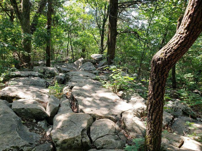 Trail On Rocks Tree Forest Tree Trunk Branch Shadow