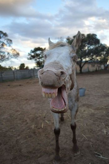 Horse Animal Themes Funny Faces FUNNY ANIMALS Funny Pics Horse Photography  Appaloosa Appaloosa Horse Equine Sky Cloud - Sky Outdoors Nature Mammal One Animal Equine Photography Equestrian Equinephotography Equestrianlife Equestrianphotography Wideangle Lens Wide Angle No People Leisure Activity photography #photo #photos #pic #pics #tagsforlikes #picture #pictures #snapshot #art #beautiful #instagood #picoftheday #photooftheday #color #all_shots #exposure #composition #focus capture moment