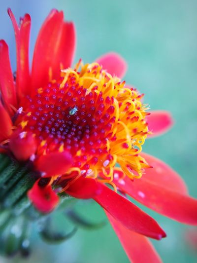 Flower Fragility Freshness Petal Close-up Flower Head Growth Beauty In Nature Stamen Nature Pollen In Bloom Red Single Flower Focus On Foreground Blossom Plant Day Vibrant Color Botany Macro Photography Macro Maximum Closeness