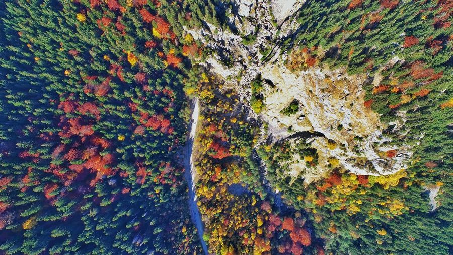 Aerial Photography Picea Abies River Aerial View Building Exterior Forest Photography Nature Photography EyeEm Best Shots EyeEm Nature Lover EyeEm Selects Autumn colors Forest Trees Forestphotography My Best Travel Photo EyeEmNewHere Multi Colored Backgrounds Full Frame Close-up