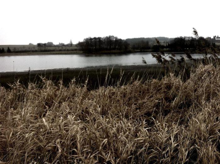 Strolling at langer Teich Strolling