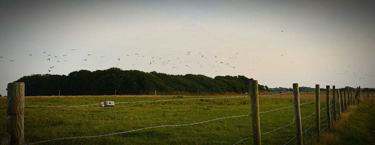 étretat Normandie France Balades Nature Paix Calme Oiseaux Bird Watching