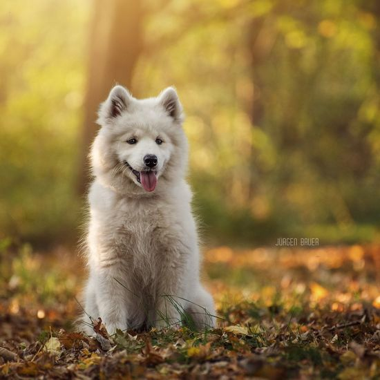 Chaya Available Light Photography Photo Photooftheday Picoftheday Dogs Dogslife Dog Love Dogoftheday Sun Sunset Summer Autumn Photographer JuergenBauerPictures Nikon Summertime Dog Pets Animal One Animal Front View Looking At Camera Mammal Outdoors Cute Portrait Nature Animal Themes