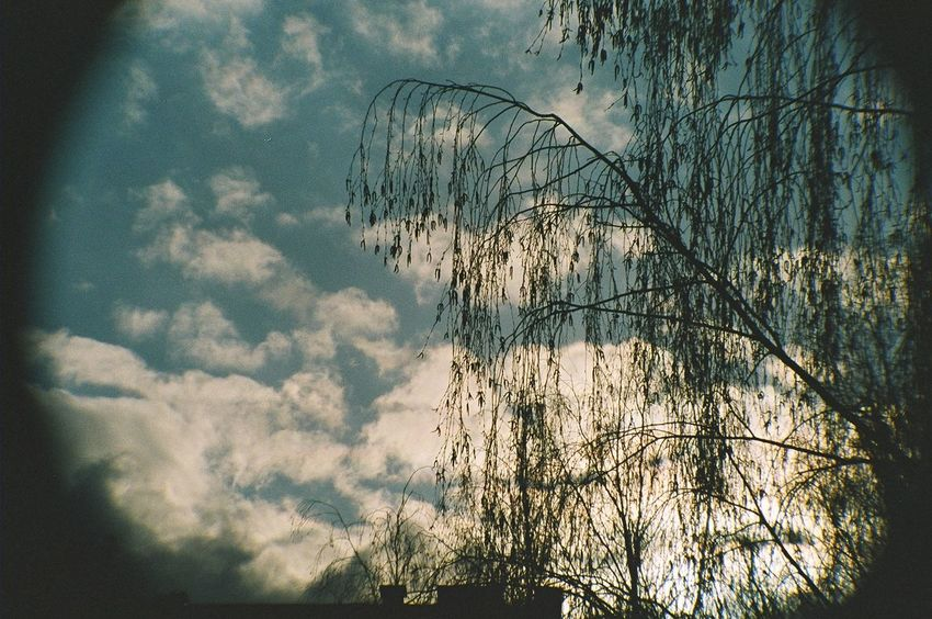 35mm Bare Tree Beauty In Nature Blue Cloud Cloud - Sky Cloudy Dark Day Growth Idyllic Low Angle View Nature No People Non-urban Scene Outdoors Outline Scenics Silhouette Sky Tranquil Scene Tranquility Tree Tree Trunk Weather