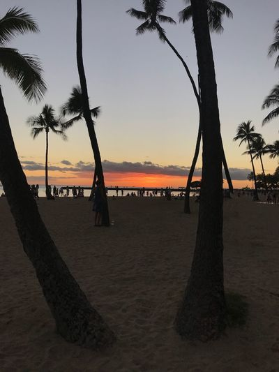 Hawaii Waikiki Tree Water Sky Sunset Orange Color Orange Sky Coconut Palm Tree Tropical Tree No People Silhouette Outdoors Tropical Climate Beach Palm Tree Plant Tranquility Tree Trunk Trunk Copy Space Copyspace Palm Trees Dusk Beauty In Nature