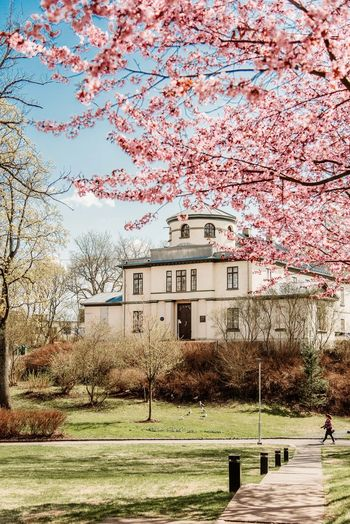 A woman enjoying a walk on a spring day in Oslo with blossoming trees. Oslo Woman Architecture Beauty In Nature Blossom Branch Building Building Exterior Built Structure Cherry Blossom Cherry Tree Day Flower Grass Growth House Nature No People Outdoors Park Plant Sky Tree Urban Walker Evans