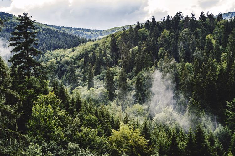 Forest Fog Foggy Mist View From Above No People Nature Nature_collection Landscape Landscape_Collection Landscape_photography Landscapes Travel Thuringia Germany Thuringian Forest My Best Photo 2015 Landscapes With WhiteWall The Great Outdoors With Adobe The Great Outdoors - 2016 EyeEm Awards Nature's Diversities