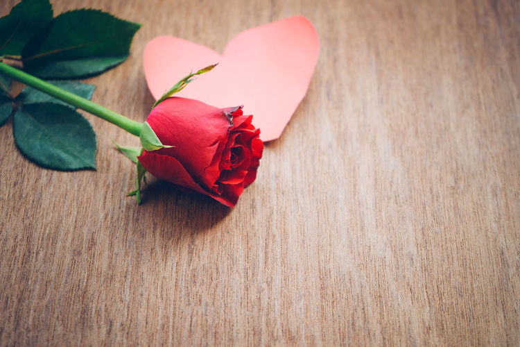Vintage red rose on wooden background prepared for Valentine's Day. Valentine gift. Beauty In Nature Close-up Flower Flower Head Flowering Plant Fragility Freshness Indoors  Love Nature No People Petal Pink Color Plant Positive Emotion Red Rosé Rose - Flower Table Vulnerability  Wood - Material