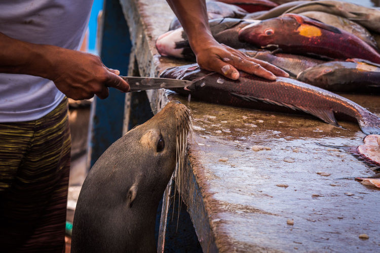 Midsection of man cutting fish by sea lion on counter at market