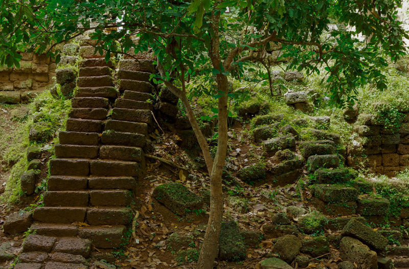 Stone wall by steps against trees