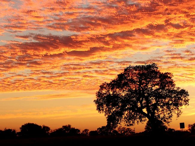 Sunset Lisadianephotography Sunset Tree Orange Color Dramatic Sky Nature Beauty In Nature No People