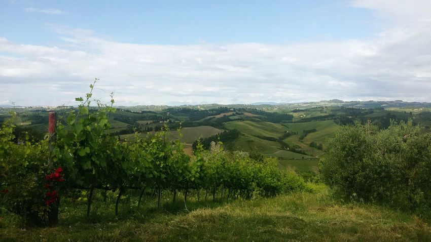Montespertoli Toscana Tuscany Countryside Tuscany Italy Beautiful Tuscany Country Infinity Vigneto Paesaggi Toscani