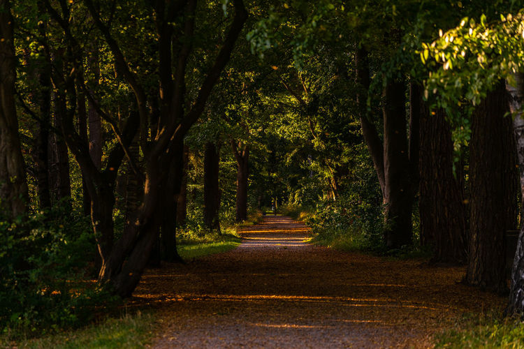 Park view Tree Direction The Way Forward Plant Tranquility Nature Growth Forest Land Beauty In Nature Tranquil Scene No People Footpath Outdoors Trunk Tree Trunk Road Diminishing Perspective Park Day Treelined