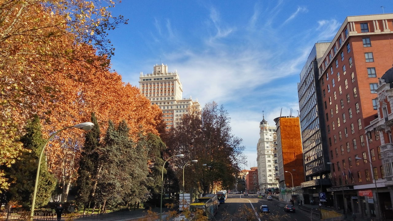 Trees And Buildings Against Blue Sky