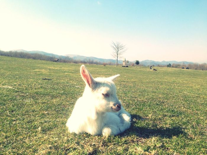IPhoneography Animals