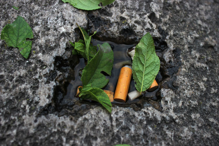 Cigarette  Leafs Water Used Back To Nature Dead Smoking Kills