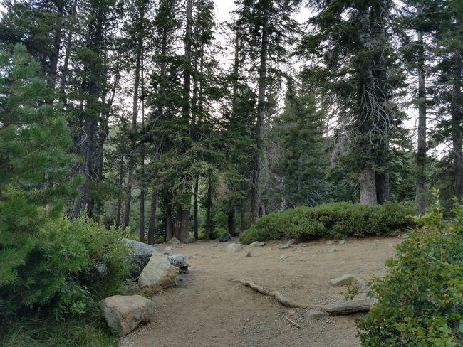 Trees Rocks Sky Castle Lake Mt Shasta