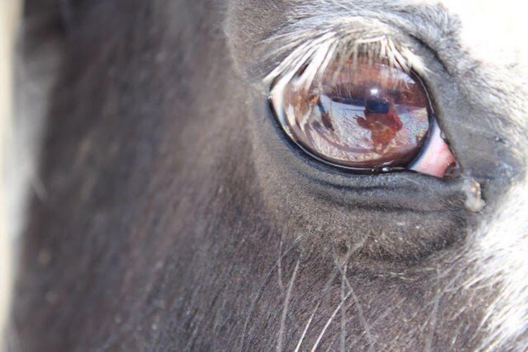 Mirror in your eyes One Animal Animal Eye Eyeball Mirror Canonphotography