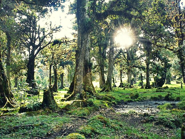 EyeEm Best Shots TreePorn Nature_collection Nature