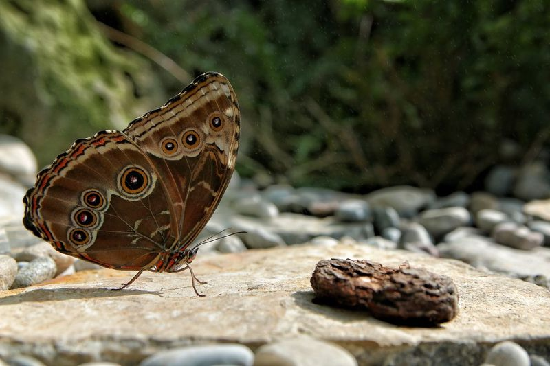 Butterfly 6 Animal Wildlife Animal Animal Themes One Animal Animals In The Wild Insect Solid Invertebrate Nature Animal Wing Butterfly - Insect Rock Day Beauty In Nature Rock - Object Animal Markings Close-up No People Stone - Object Outdoors EyeEmNewHere