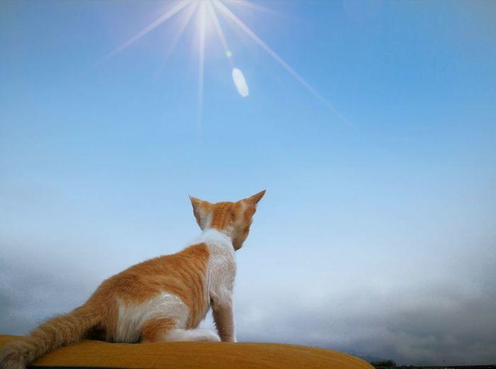 sky Pets