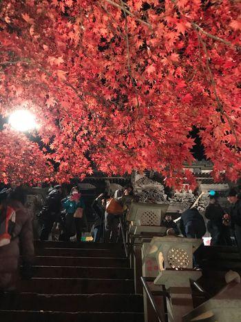 大山寺の紅葉🍁