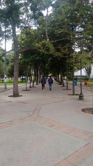 Av NQs Arboles , Naturaleza UniversidadNacionaldeColombia Universidad Nacional De Colombia Universidad University Campus University Bogota,colombia.